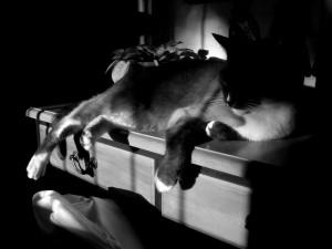 ciemny pokój