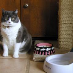 Meble dla kotów – czym się kierować?