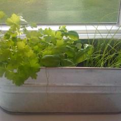 Ogródek domowy – łatwiejsze niż myślisz